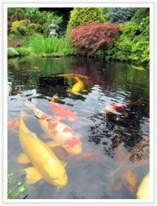 backyard landscaping fish pond
