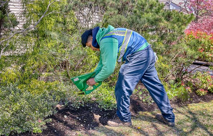 lawn elements employee fertilizing bushes