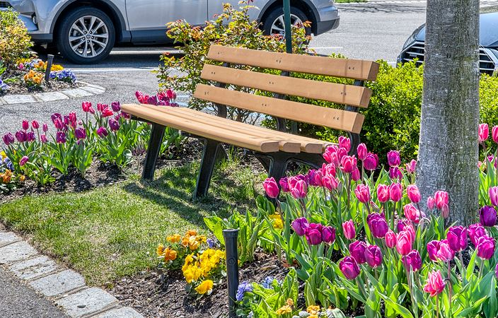 colorful flowers around bench