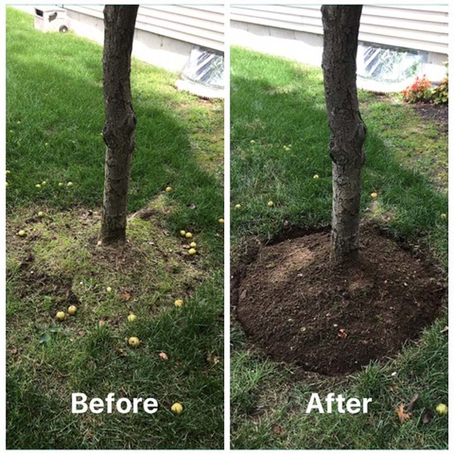 edged tree before and after
