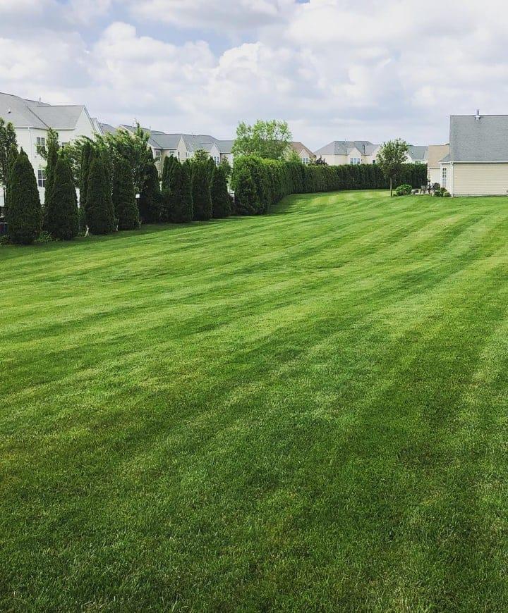 beautiful lawn