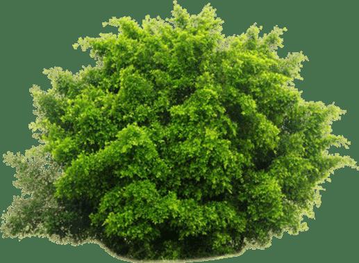 shrub bush cutout