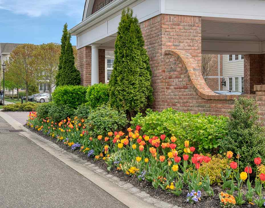 tulips and trimmed shrubs building entry way