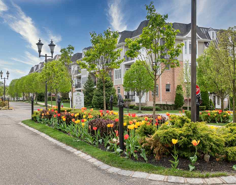 tulips on roadside